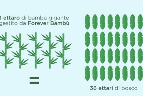 Video challenge coltivazione bambù